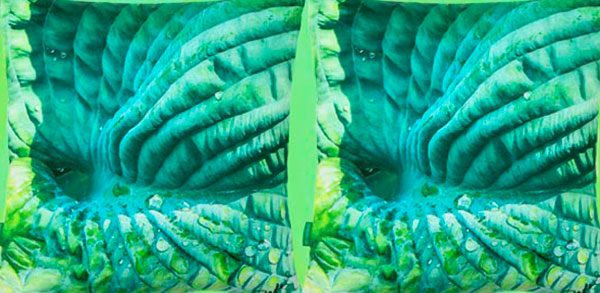 Paola Prints Goes Green