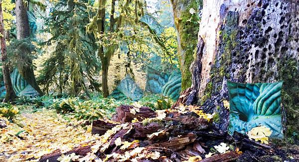 Sampling the Seductive Hoh Rainforest