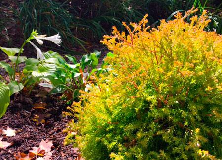 Fall plant care