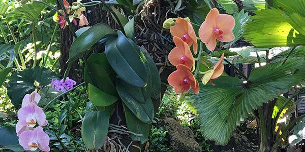 Florida: Where Art Meets Nature