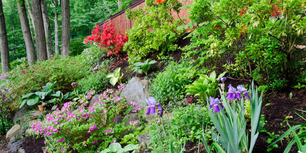 How Green is Your June Garden