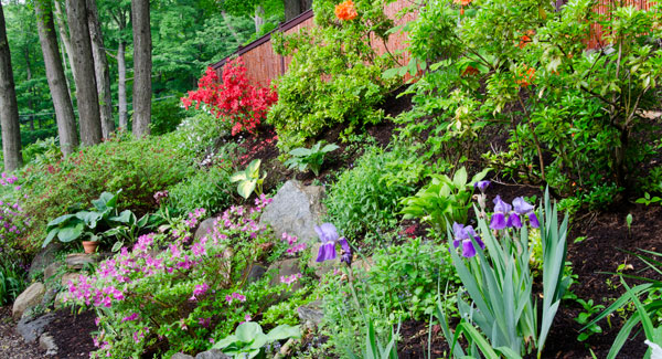 How Green is Your June Garden