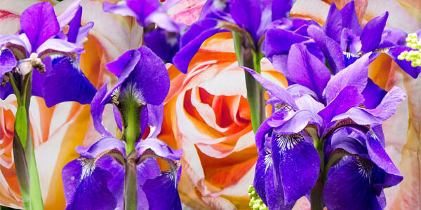 A Summer Bouquet of Rose and Iris