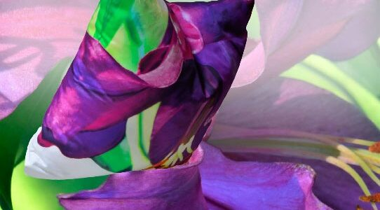 La Violetta- A New Paola Pillow