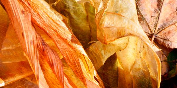 Wonderful Autumn Colors