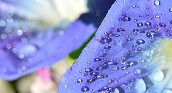Some Flowers Resemble A Flight of Fancy
