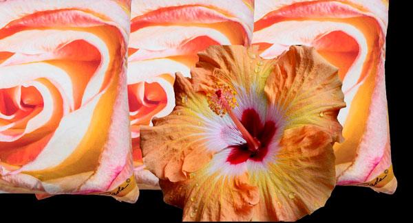 Peach Echo by Paola Prints