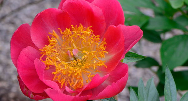 Blossom Shopping in a June Garden