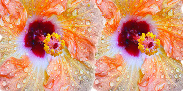 The Sparkly Tropical Hibiscus